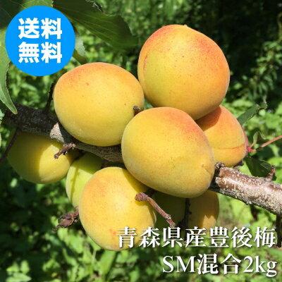 フルーツ・果物, 梅  SM 2kg