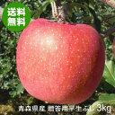 青森県産りんご 贈答用早生ふじ 中玉 約3kg(10〜12玉)【送料無料】