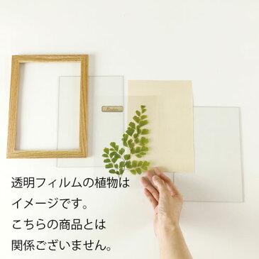 キシマ ハーバリウム アートフレーム A4サイズ ミヤコグサ ナチュラル Natural KH-61088