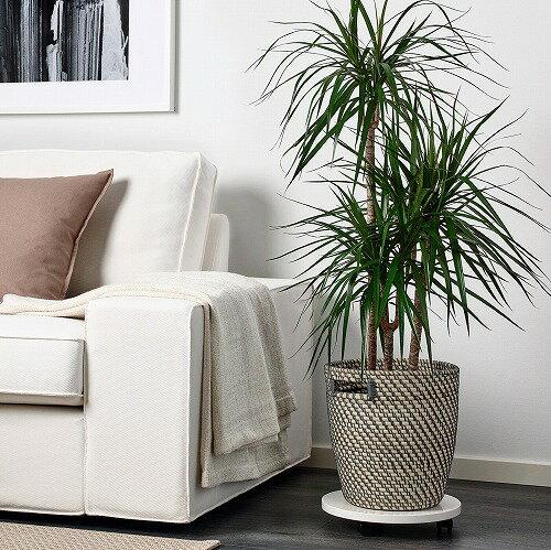【IKEA/イケア/通販】RÅGKORNローグコルン鉢カバー,室内/屋外用ナチュラル,24cm(80407557)