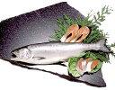 ★塩紅鮭 頭付き(約2.0kg)カナダ産
