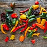 World Hot Chili Peppers とうがらし 苗 選べる18種類 1鉢 3号【お届け中】トウガラシ 唐辛子 苗 激辛 野菜