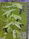 【ハッピーガーデン新登場】黒花に注目♪サルビア ディスコロール1鉢  Salvia  discolor