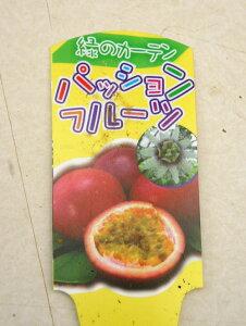 見て楽しい♪食べてトロピカルな美味しさ緑のカーテン♪ パッションフルーツ トケイソウ苗 3...