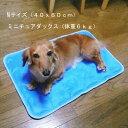 大型犬がのってもサイズ的に大丈夫です。期間限定 送料無料【ドッグ】【あす楽対応】【あす楽...