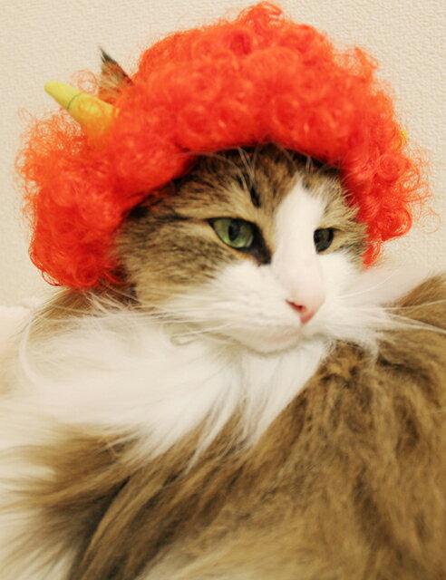 猫用品, キャットウェア Wigs2youP-022BOX