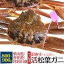 【送料無料】活松葉ガニ 800g前後 (ズワイガニ)産地証明...