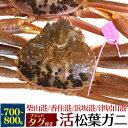 【送料無料】活松葉ガニ 700g前後 (ズワイガニ)産地証明...