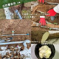 さつま竹源作_自然薯_収穫