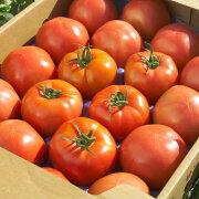 ワンダーファーム サンシャイントマト4kg お取り寄せ 野菜 ギフト トマト いわき ふくしまプライド