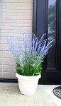 【造花】【ラベンダープランター】【屋外使用可】【\8500】【送料無料】【2色よりお選び下さい】