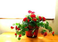 【人工観葉植物】【造花】【ゼラニュームプランター】【触媒加工】【送料無料】