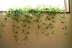 グリーンカーテン人工観葉植物【置きにも・壁にも】【5種よりお選び下さい】