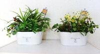 造花観葉植物ミックスプランツ触媒加工品2つの中から1っお選びください。
