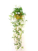 観葉植物造花