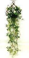 人工樹木ジャスミン壁掛け触媒加工品