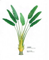 【人工観葉植物】【トラベラーズパーム】【2m75cm】【フェイクグリーン】【インテリアグリーン】【造花】【代引き不可】【送料無料】