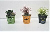 【ハロウイン】【ハロウインボタニカ3点セット】造花人工観葉植物【送料無料】
