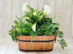 人工観葉植物造花触媒加工品オフィスグリーン