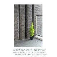 【人工観葉植物】【ゴールドクレスト】【人工観葉植物ゴールドクレスト】【フェイクグリーン】【送料無料】【インテリアグリーン】【90cm】【造花】【触媒加工】【屋外可】