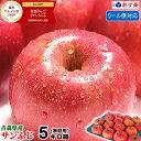 あす楽【クール便対応】青森りんご ご家庭用 サンふじ 5キロ