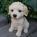 犬の置物 ミックス犬 ラブラドゥードル いぬ イヌ 動物 N