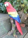 小鳥の置物 インコの置物 特大 オウム 12141N 鳥 とり 動物 オーナメント オブジェ 庭 ガーデン 雑貨 インテリア リアル デスプレィ 小物 ガーデニング