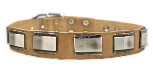 "Dean and Tyler ""WHITE LIGHT"" Leather Dog Collar with Beautiful Nickel Plates - Tan - Size 40-Inch:ワールドセレクトショップ"