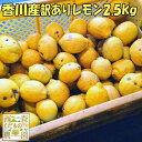 香川産 訳ありレモン2.5kg[2つから送料無料♪](12月〜販売)