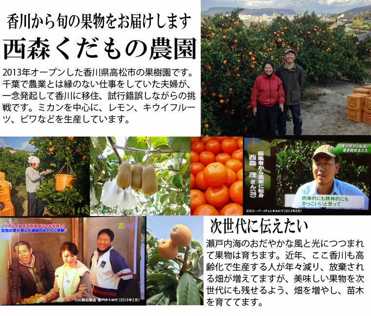 香川産キウイフルーツ(香緑)2kg[送料無料♪](11月下旬〜)