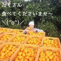 香川産みかん特選5kg箱【11月下旬より順次発送♪】(温州みかん産地直送)
