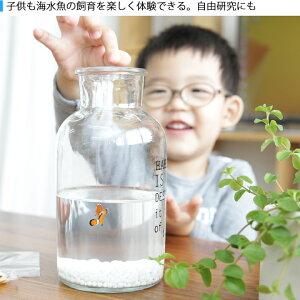 かんたん海水魚飼育小さな海☆スモシー海水魚飼育キットインテリア自由研究