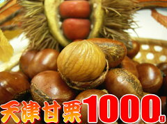 【送料無料】甘栗1キロ発送当日の炒り立ての甘栗だけをお届け中♪横浜中華街のお土産にも大変喜ばれています。【楽ギフ_包装】【RCP】10P19Jun15