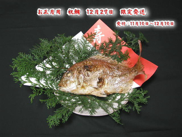 お正月用【魚秀の祝鯛】12月29日限定発送天然・明石鯛・生の時1.2kg