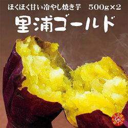 焼き芋冷蔵新芋「里浦ゴールド」冷やし焼き芋1.5kg送料無料