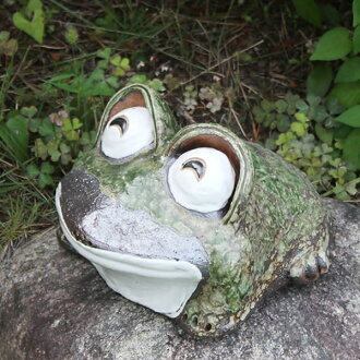 Shigaraki baked 7, laughing eyes frog! Good luck frog / garden to the front door before pottery frog! / Ceramics / pottery and while big frog shine / frog / ware and Shigaraki / frog
