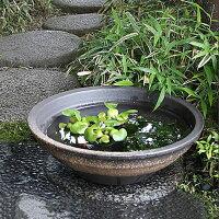信楽焼きスイレン鉢