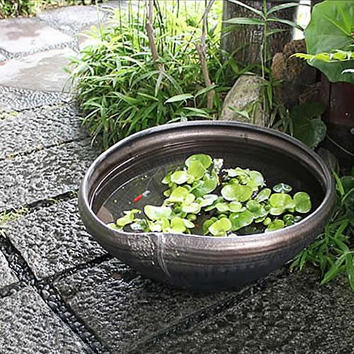 睡蓮鉢 大型