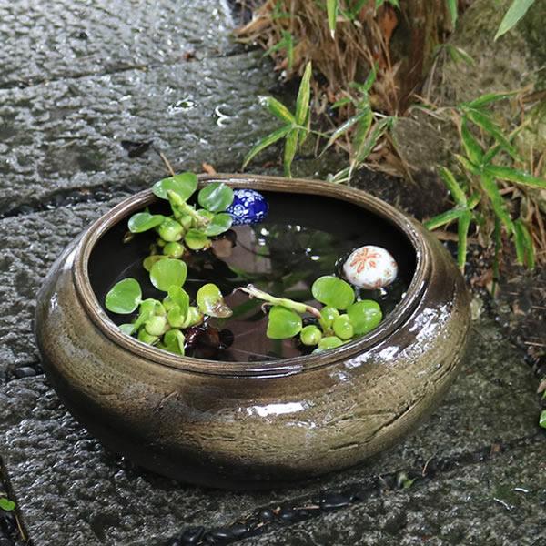 水鉢 めだか鉢 金魚鉢 メダカ鉢 スイレン鉢