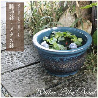 No. 13 sea cucumber color water bowls! Shin Raku suiren pots! Ideal for fish bowls, fish bowl! Water lilies pots / pottery water lily pot / Lotus pots / already pot / medaka pots / pots / pottery / water coupled pots / water bowl / water lilies pots / ea