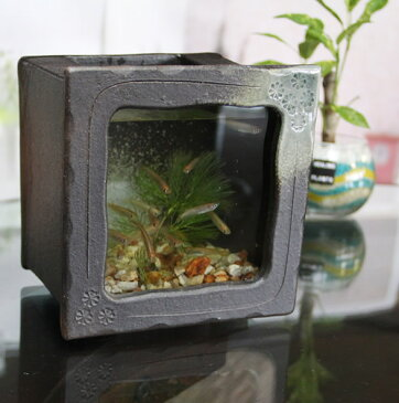 信楽焼 き水槽 角型小(茶色)陶器水槽 陶器とガラスがコラボ インテリア水槽 金魚鉢 メダカ鉢 陶器 水鉢 めだか鉢 信楽焼金魚鉢 鉢 はす鉢 睡蓮鉢 su-0212