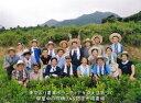 残留農薬ゼロ《私たちが作った屋久島自然栽培茶です》 一番茶 粉末緑茶 パウダーティー100g×3袋 3