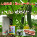 野菜栽培セット緑のカーテンセットキュウリ苗付き支柱とネットのセット立掛けタイプ800mm×2400mm