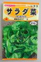 野菜種レタス種サラダ菜(サンタクララ)春、秋蒔きで作りやすい」