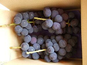 葡萄の王様◆5〜7日以内に発送予定[ご家庭用]種無し巨峰 2キロ箱(4〜6房前後)