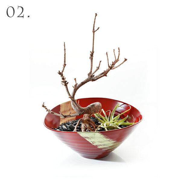 新作 サラダボウル 昇龍(朱) × 枯れ盆栽「赤松」