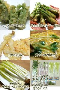 山形県産山菜詰め合わせセット