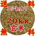 【送料無料】【山口県】【周南市八代】【エコ50認証米】【減農薬栽培】【生産者直詰】【24年度産】【玄米】つるの里米こしひかり20kg