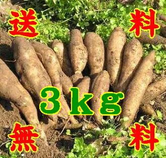 Yacon fruits like raw potatoes 3 kg * additional shipping, Northeastern costs 300 yen, Hokkaido and Okinawa 500 yen * (10000916)