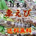 日本最北の養殖場で育った車えびです。低温で育った海老は身がしまり甘みがあります。日本で唯一の日本海産車えびです【日本海車えび】【山口県】【長門市油谷】【楊貴妃伝説の里】【山崎水産】活き車海老1kg